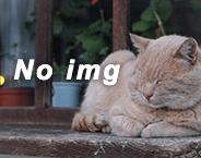 no_img2